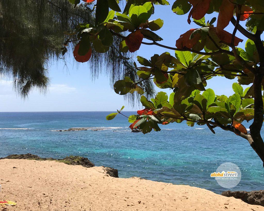 木陰から眺める青い海