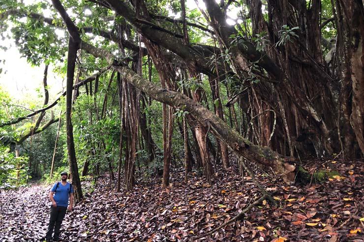 ハワイ州観光局だから実現!特別なマウイ島の旅
