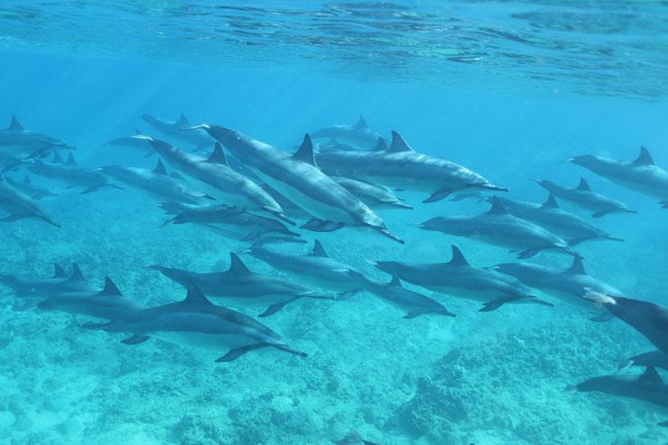 ドルフィン&ユー 野生のイルカと泳ぐツアー