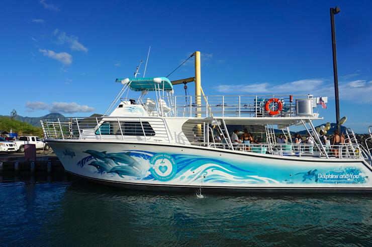 最新ボートでGo!イルカに出会う旅を満喫