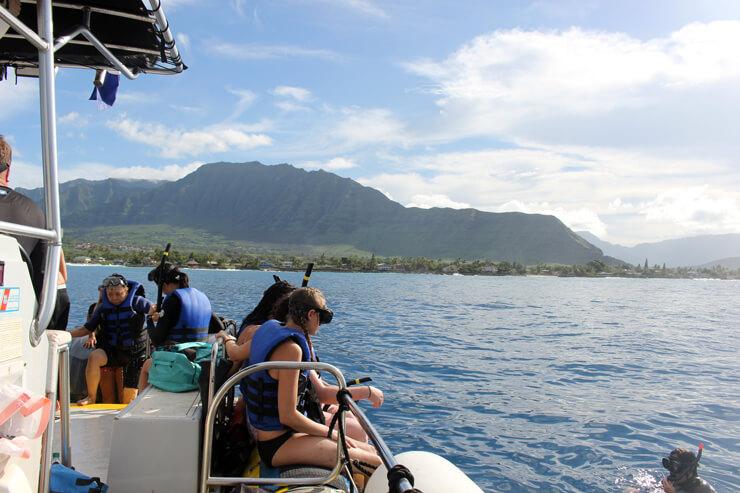 海好きはこれ! 野生のイルカと泳ぐツアーを満喫
