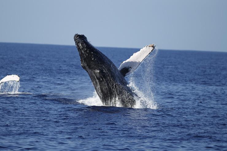 クジラに会える冬季限定ツアー「ホエール&ユー」