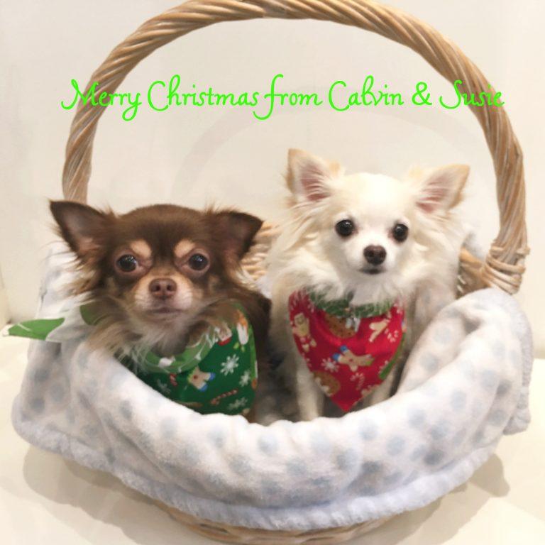 ☆カルビン&スージー・クリスマス営業時間のお知らせ