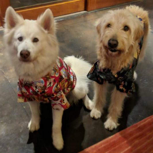 カルビン&スージー・アロハシャツをもらったヘンリーとアーサー