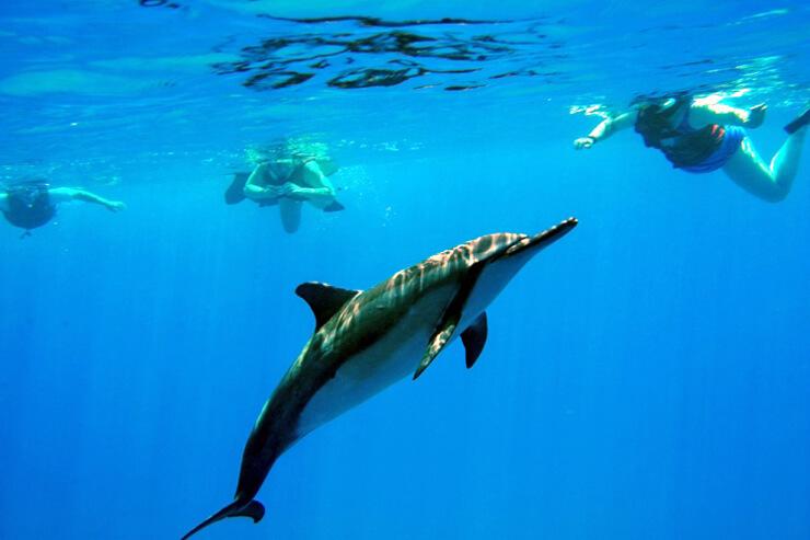 ランチ付き!ハワイの大自然を満喫できるドルフィンツアー