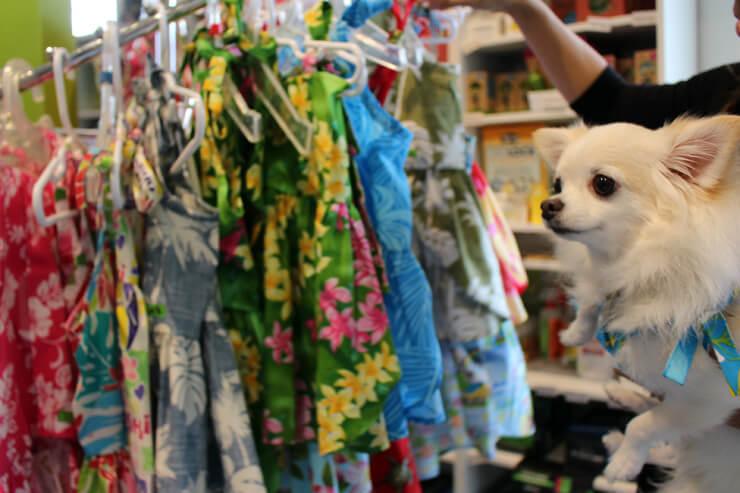 ミスティ「今日はどのドレスにしようかしら~」