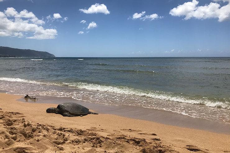 2019年版!ハワイのビーチで注意すべきルール&マナー