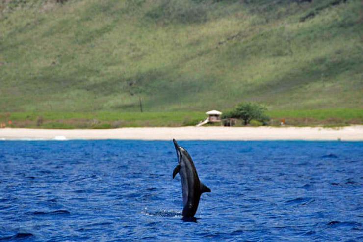 野生のイルカと泳げるドルフィンツアー!