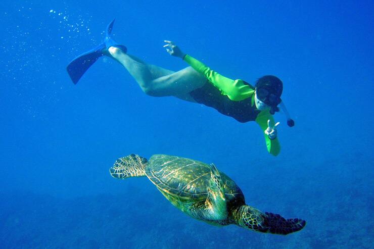 熱帯魚やカメとも遊べるドルフィンツアー!