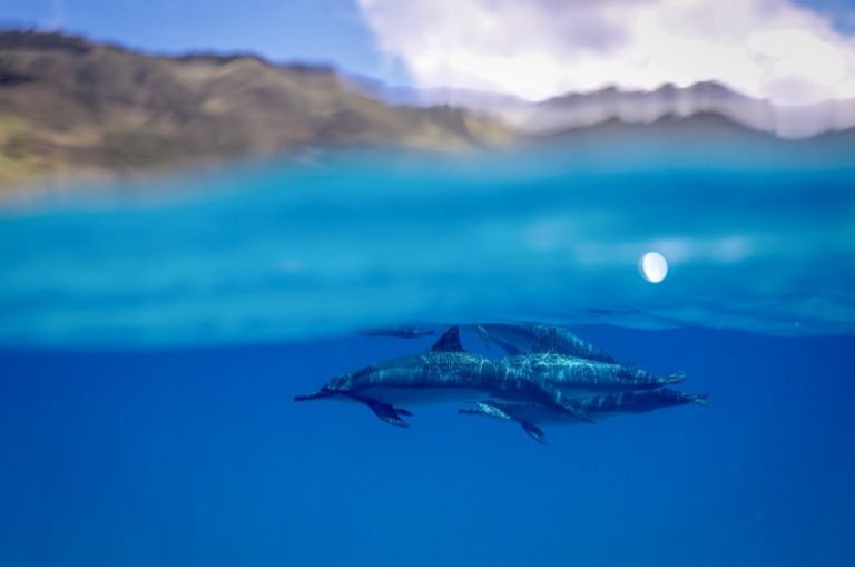 晴天率が高いこの時期は海の中も青くてキレイ!