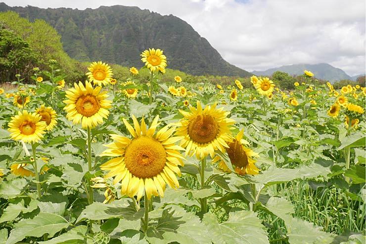 今週ハワイで起きたこと7月1週め【チャット】