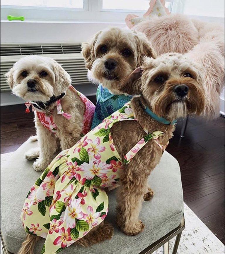 カルビン&スージー:Lulu, Koko, and Yuzu