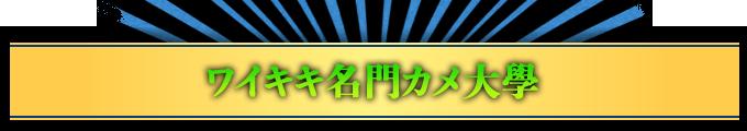 ワイキキ名門カメ大學