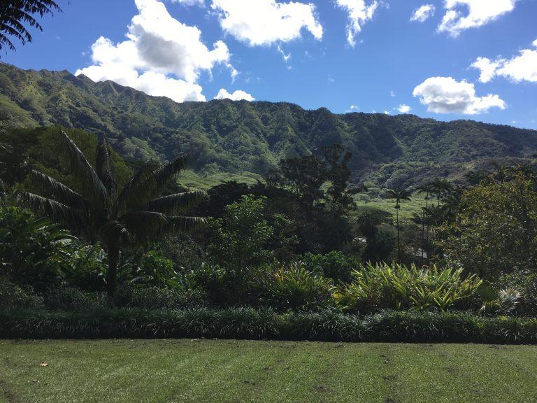 ハワイで森林浴〜フォーレスト・ベイジング
