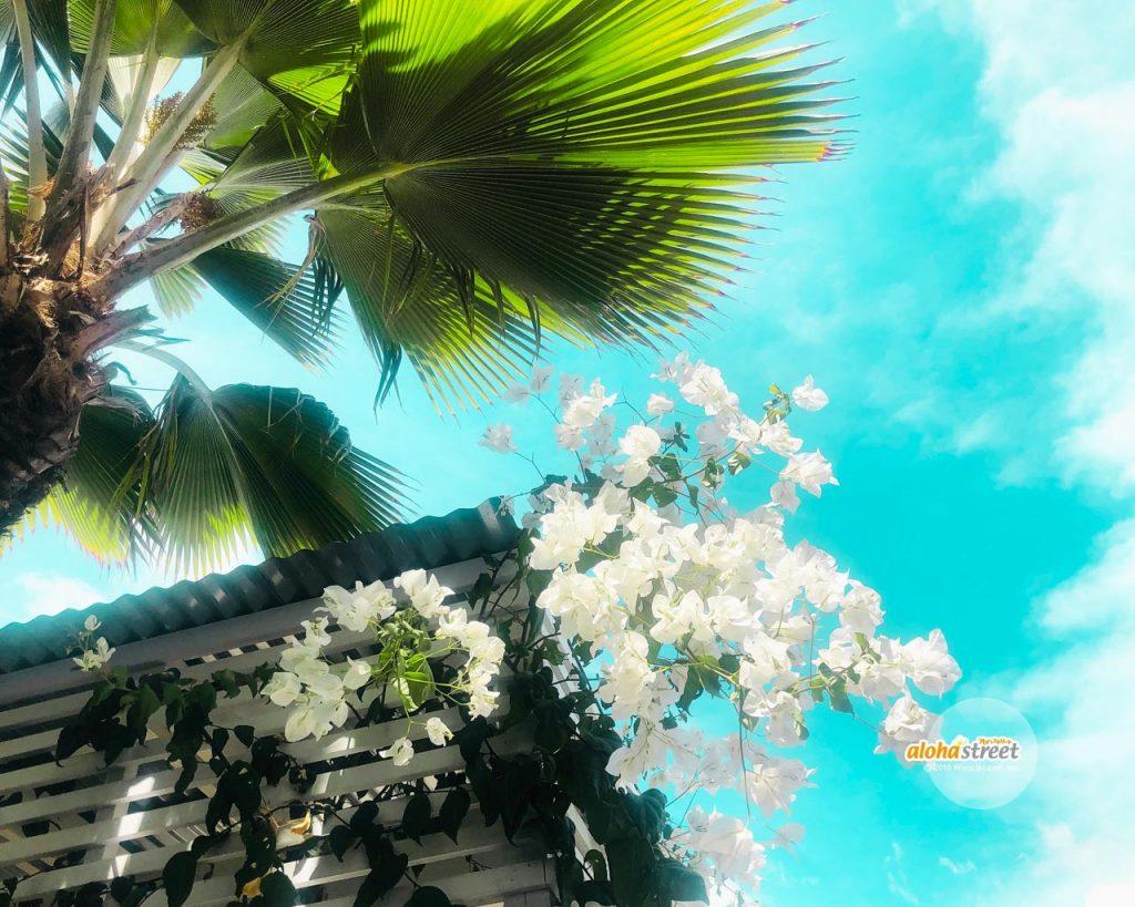 ハワイの壁紙 ページ 3 アロハストリート ハワイ