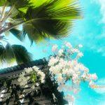 青い空に映える白い花