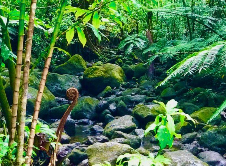 マノアの滝ツアーを360度ビデオでリアルなジャングル体感!