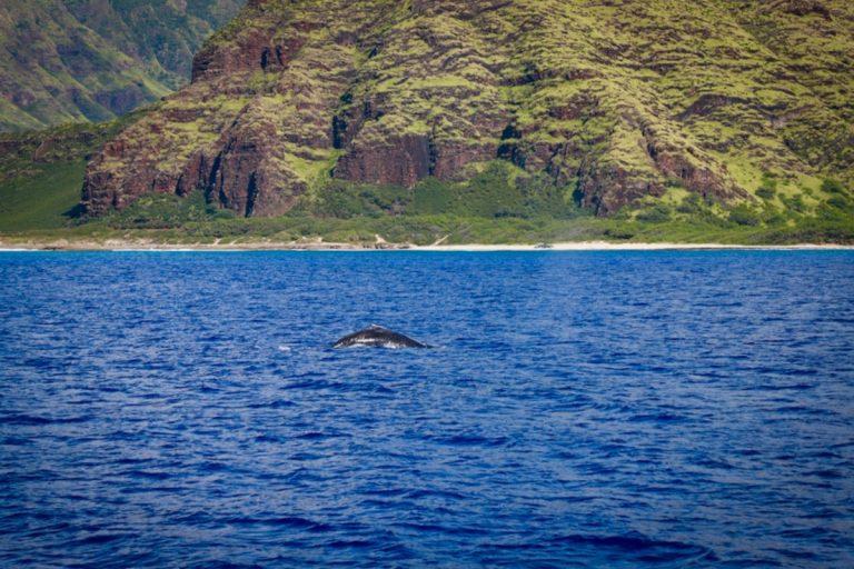 クジラの親子ハワイに到着〜♪