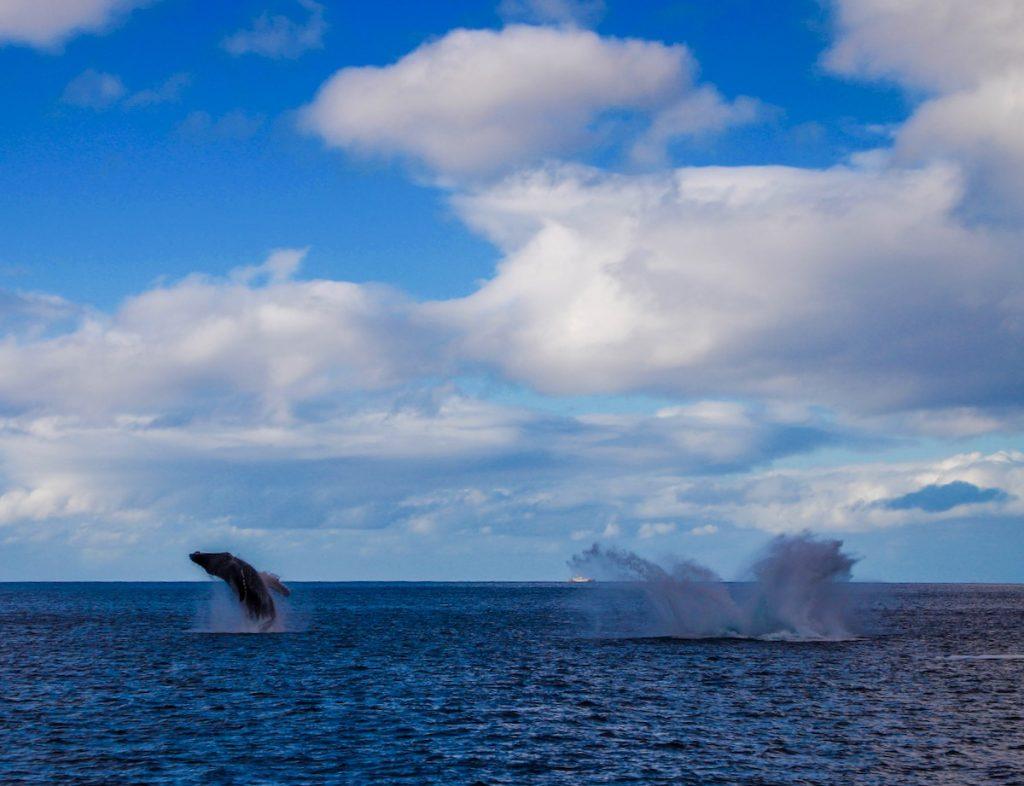 目の前に出たー!!!巨大なクジラちゃん