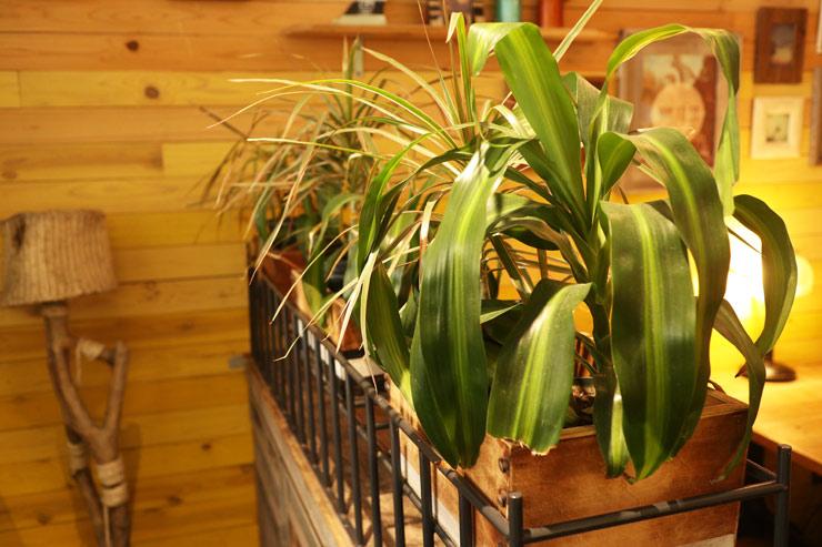 植物のインテリアもステキ