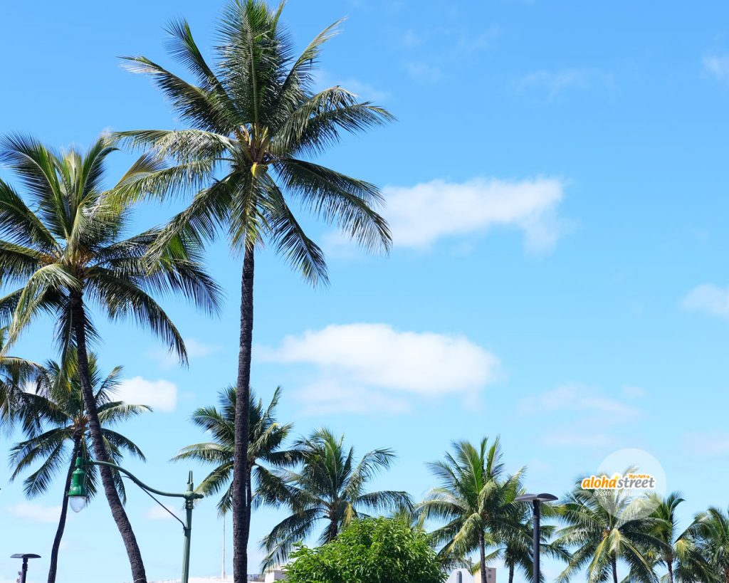 南国の風に吹かれて揺れるヤシの木