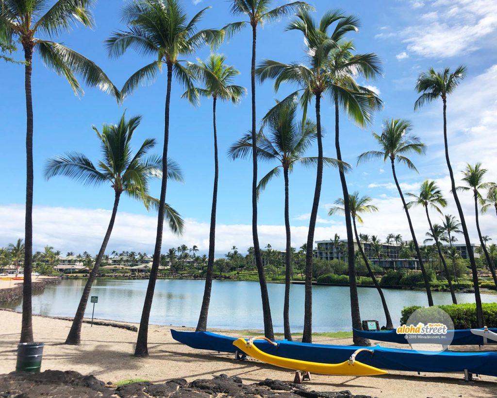 ハワイの壁紙 アロハストリート ハワイ