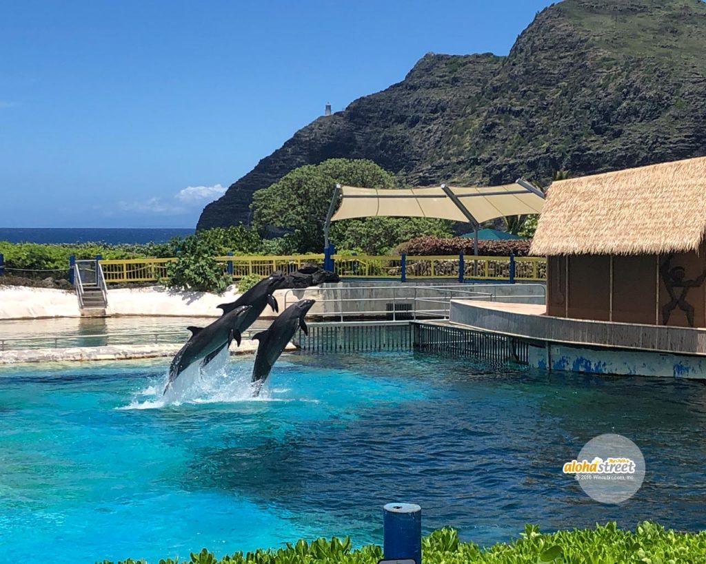 イルカと一緒に泳ぎたいなあ