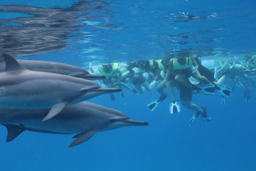イルカの先祖は6,000万年前にはすでにいた!?