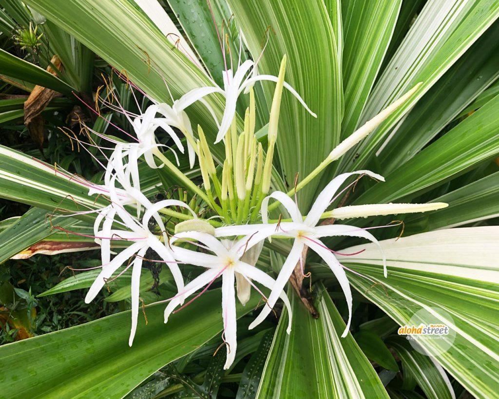 ハワイならではの植物に出会える場所
