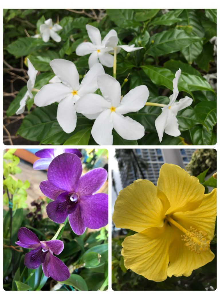 ハワイのお花さんたち🌺🌺