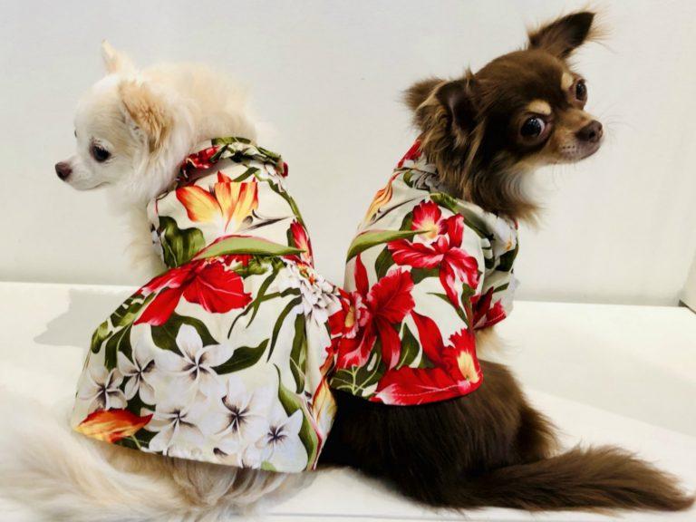 カルビン&スージー:新しいアロハシャツ&ワンピ
