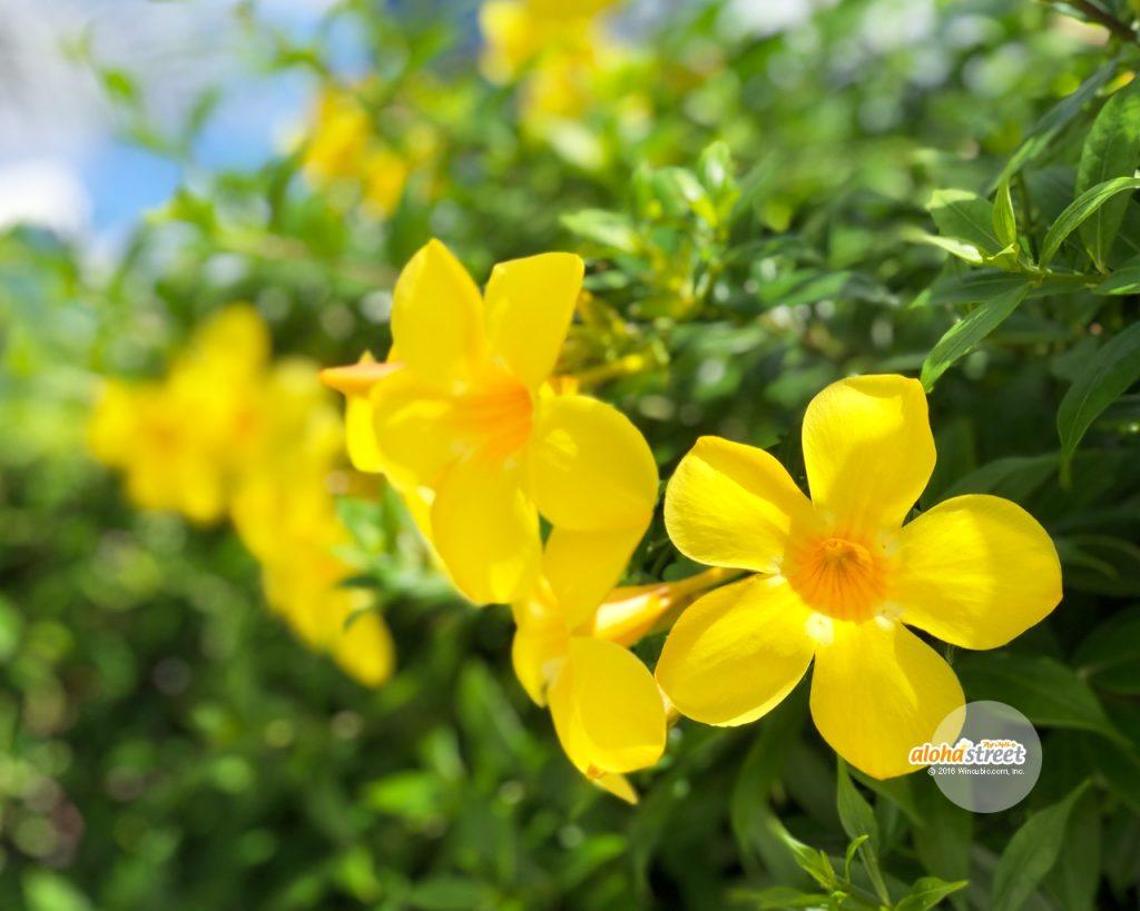 元気いっぱいに道端に咲く花に癒やされる