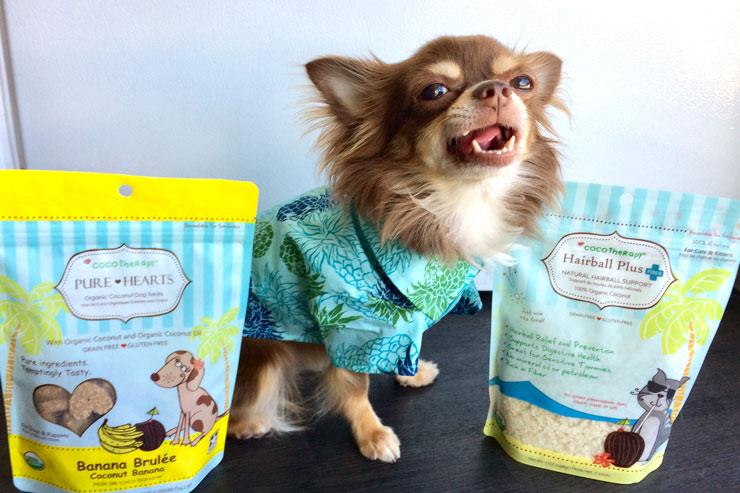 ペット専門店に栄養豊富なココナッツグッズが入荷
