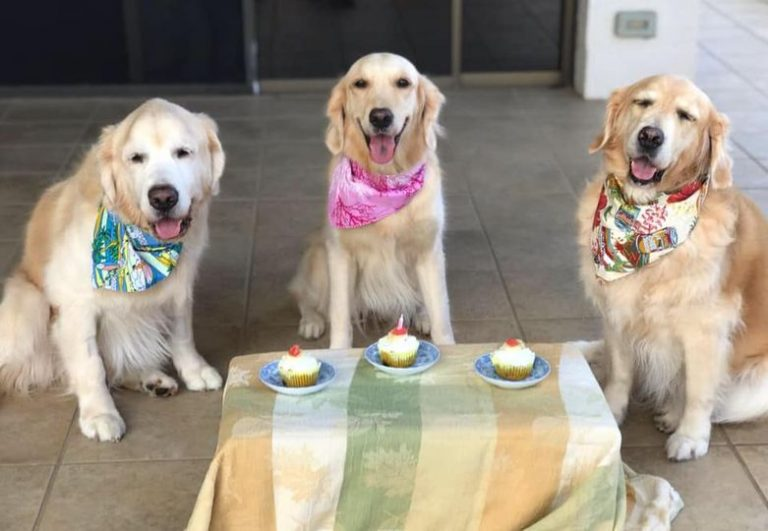 カルビン&スージー:スペンサーのお誕生日