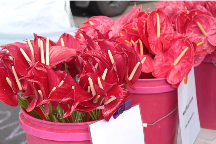 アンスリウムなどハワイならではの花も販売