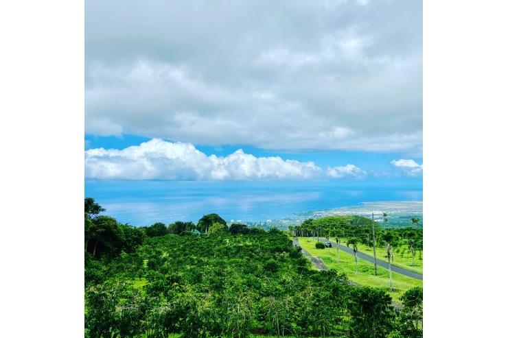 UCC ハワイ コナコーヒーエステート