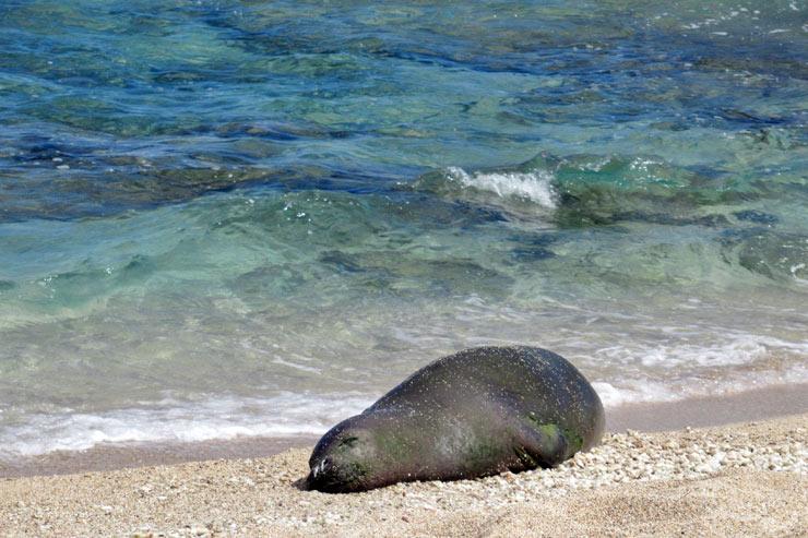 オアフ島ノースの秘境、神話と自然の宝庫「カエナ岬」