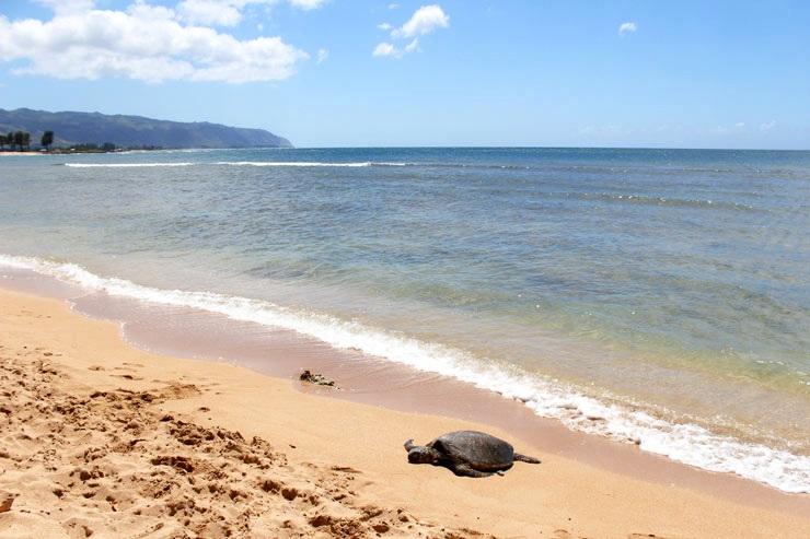 ハワイのおすすめビーチ アリイビーチ