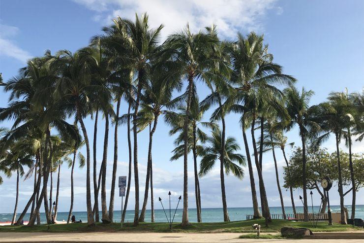 ハワイのおすすめビーチ クヒオビーチ