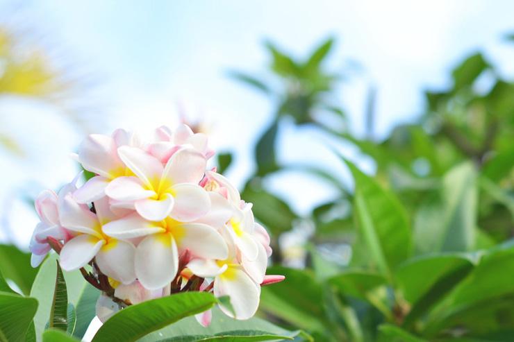 ハワイに咲くトロピカルな花や植物まとめ