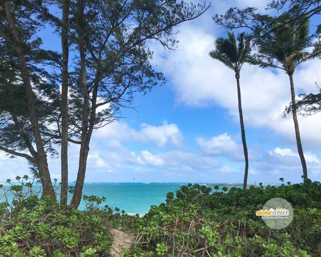 木の間から見えるエメラルドの海
