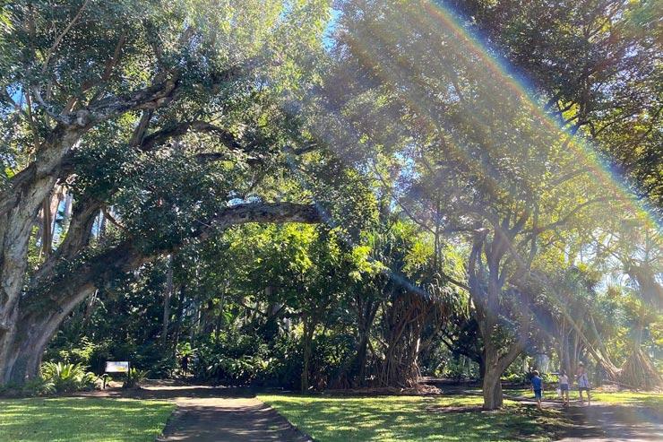 ダウンタウンの植物園でハワイの自然の恵みを満喫