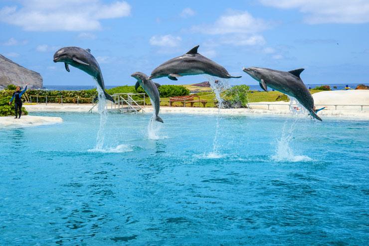 家族で満喫!週末は海のテーマパークへGO