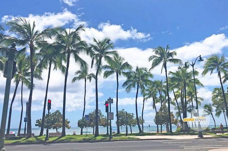 日本にハワイの風を届けたい!クラファンをスタート