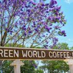 紫のお花が咲き誇る木の下でコーヒーを一杯