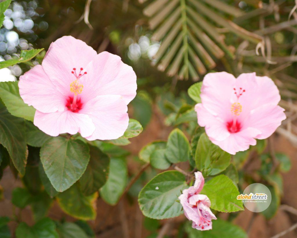 淡いピンクの花びらがひらひら
