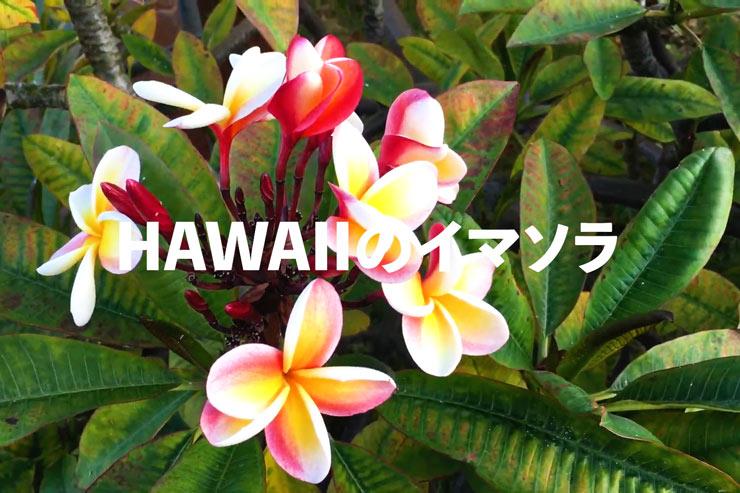 アロハをお届け!ハワイのイマソラ総集編 5月4週め