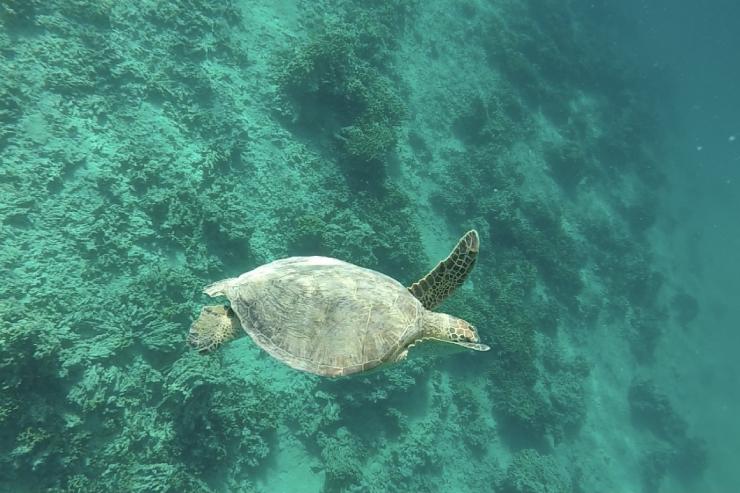 今週ハワイで起こったこと2021年6月1週め【チャット】