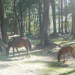 ハワイ島の自然で暮らす馬の親子
