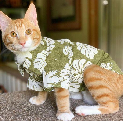 カルビン&スージー:猫ちゃんにもアロハシャツ